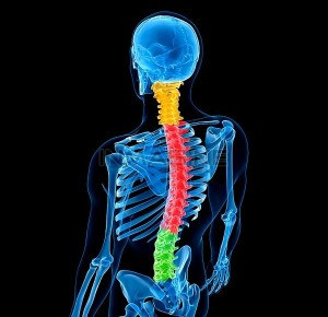 SPINE PICTURE 4